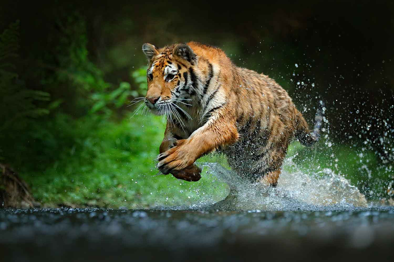 Indexima puts a tiger in your Hadoop
